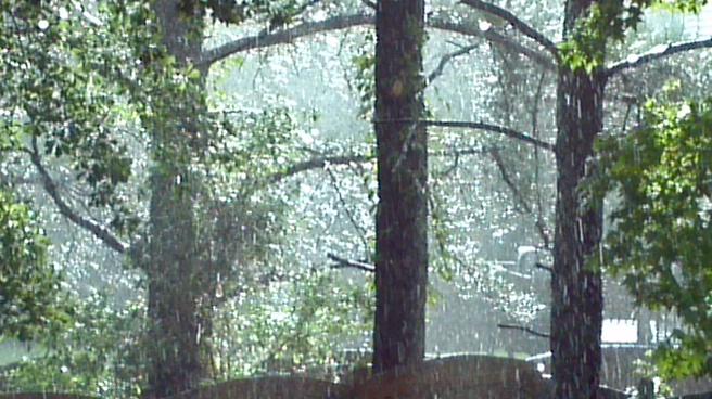 Trees glisten with Rain