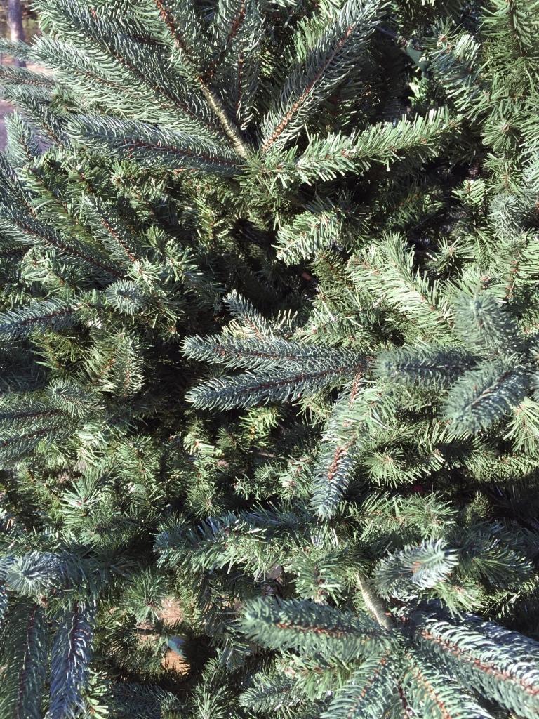 tree clean